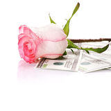 Rose flower and money Stock Images
