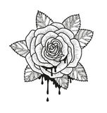 Rose flower monochrome vector illustration. Beautiful rose isolated on white background. Element for design of tattoo Stock Images