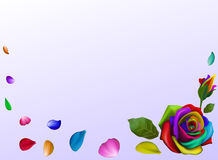 Rose flower . Multicolored. white background corner.petals Royalty Free Stock Photos