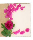 Rose Flower and Notebook Royalty Free Stock Images