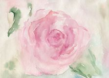 Rose Flower. Original watercolour illustration of a rose flower Stock Photography