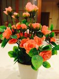 ROSE. Flower Oros Colour Beatiful Stock Photos
