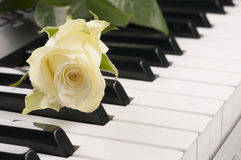 Rose flower over piano keyboard. Studio shot Royalty Free Stock Photos