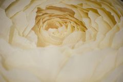 Rose flower Paper flowers. Home hobby. Needlework. Decoration of flowers. Rose symbol of love royalty free stock photo