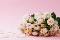 Rose flower on pastel pink background. Beautiful greeting card. Copy space for text. Royalty Free Stock Photography