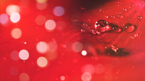 Rose flower petal with water droplets Stock Photography