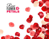 Rose Flower Petals Background illustration stock