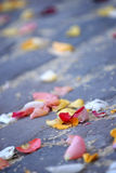 Rose flower petals and rice. Left on cobblestone floor after a wedding Stock Images