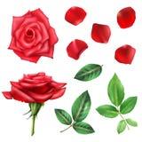 Rose Flower And Petals Set Immagine Stock Libera da Diritti