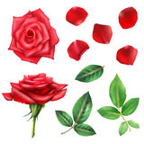 Rose Flower And Petals Set Royalty Free Stock Image