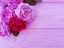 Rose flower on pink wooden background greeting. Rose flower on pink wooden background holiday greeting stock photo