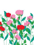 Rose flower plant. Illustration rose flowers plant white background Royalty Free Stock Images