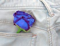 Rose flower in pocket blue jeans. Royalty Free Stock Image