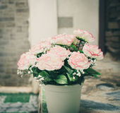 rose flower pot Royalty Free Stock Photography