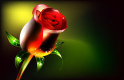 Rose flower. Red on a dark background with drops of water Vector Illustration