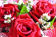 Rose for celebity and for love royalty free stock images