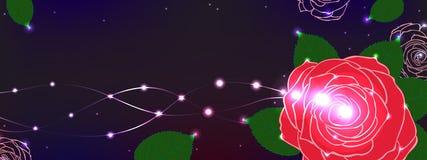 Rose flower romance banner horizontal bright Royalty Free Stock Photo