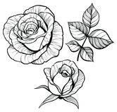 Rose flower set with a leaf Stock Photo