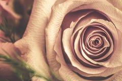Rose flower shabby style. Stock Photo