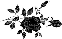 Rose flower silhouette Royalty Free Stock Images
