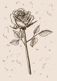 Rose flower sketch Royalty Free Stock Photos