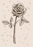 Rose flower sketch Stock Image