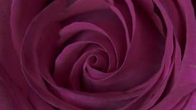 Rose Flower slut upp bakgrund Härligt mörker - röd roscloseup Symbol av förälskelse Valentine Card design HD 1080p stock video