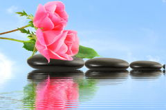 Rose flower on stone with water reflection in sky background Stock Images
