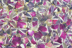 Rose flower tea Stock Photos