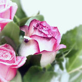 Rose Flower with Tinsel at the Edges of the Petals Royalty Free Stock Images