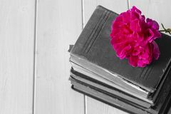 Rose flower on top of a pile of old antique books.  With selective colour. Rose flower on top of a pile of old antique books.  On a white wood surface.  With royalty free stock photography