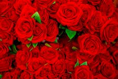 Rose - Flower, Flower, Valentine`s Day - Holiday, Backgrounds, R. Red roses background - natural texture of love stock image