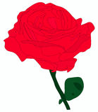 Rose flower in vector Stock Photography