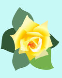 Rose. Flower vector illustration for a book or site Stock Images