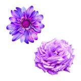 Rose Flower verde blu Immagini Stock