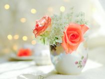 Rose flower on white background royalty free stock photo