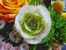 Rose flower. White rose in bouquet of flower. Natural color and high brithness stock images