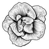 Rose Flower Woodcut Vintage Engraved Etching stock illustration