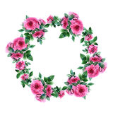 Rose flower wreath. Floral circle border. Watercolor frame stock illustration