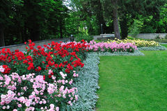 Rose flowerbeds in a garden of Bern, Switzerland Royalty Free Stock Images