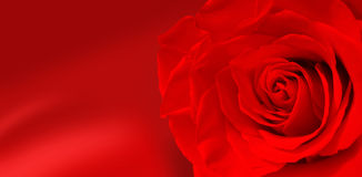 Rose flowers. Red rose background for invitation or postcards Stock Photo