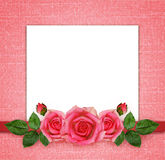 Rose flowers arrangement and frame Royalty Free Stock Photo