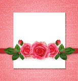 Rose flowers arrangement and frame Royalty Free Stock Images