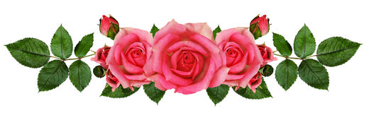 Rose flowers arrangement Stock Photos