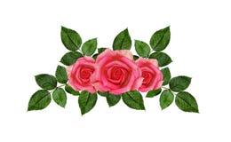Rose flowers arrangement Stock Image