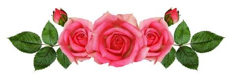 Rose flowers arrangement Royalty Free Stock Image