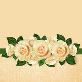 Rose flowers arrangement Royalty Free Stock Photos