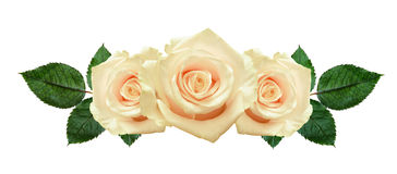 Rose flowers arrangement Royalty Free Stock Images