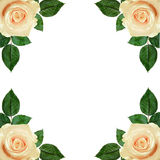 Rose flowers arrangement Royalty Free Stock Photo