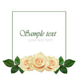 Rose flowers arrangement Stock Photo